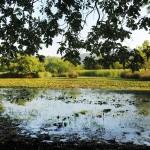 Karacabey Longoz Ormanı - BBB Arşivi