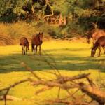 Karacabey Longoz Ormanı - Alper Tüydeş