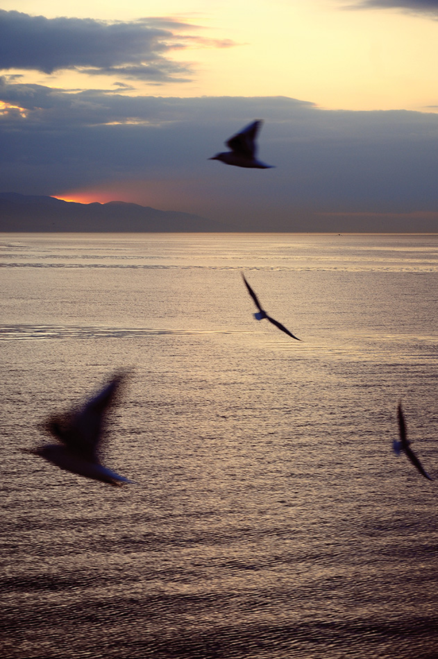 Kuşlar, Engin Çakır