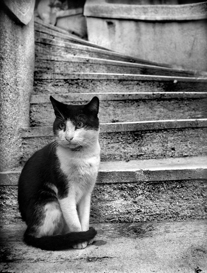 Photo of Kamondo Merdivenleri'nde