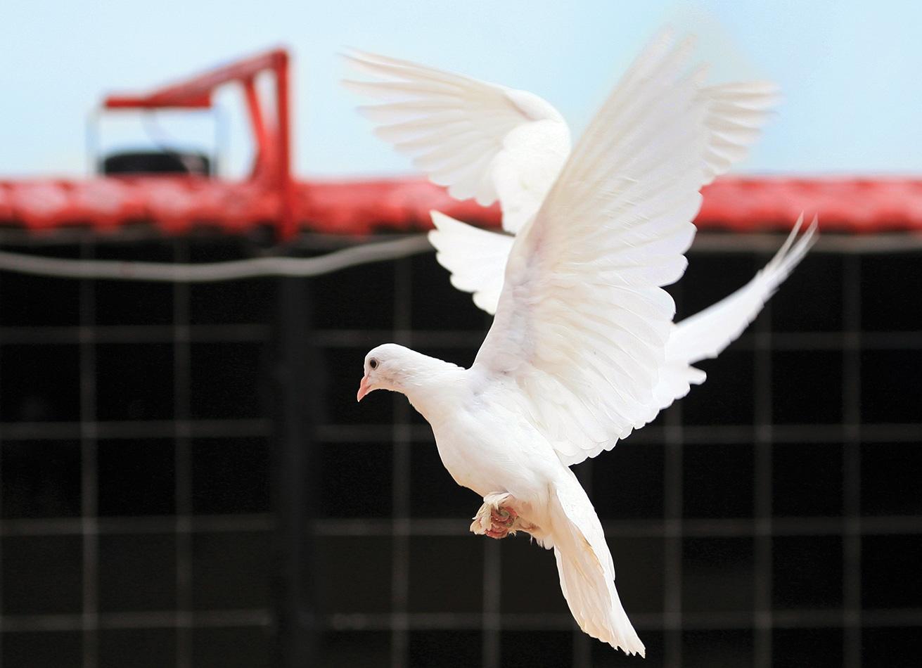 Bursa Posta Güvercinleri Derneği, Yeni Karaman Mahallesi Bursa - Haziran 2010 - Demet Argun