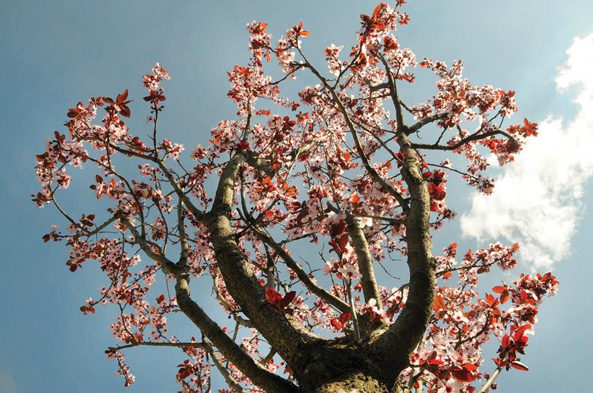 Erik ağacı - Engin Çakır