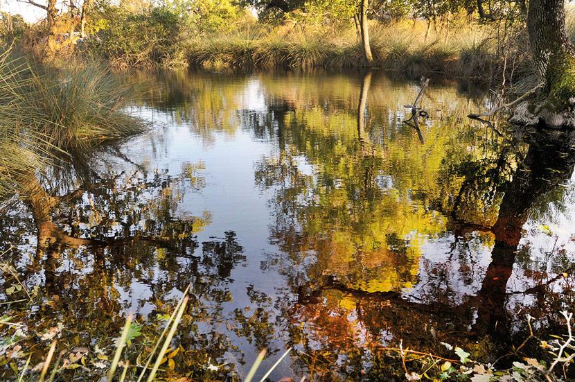 Engin Çakır, Karacabey Longoz Ormanları