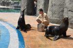 Bursa Zoo`nun yeni misafirleri fok ve penguen
